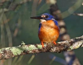 Azure-Kingfisher2-ct280-280x220